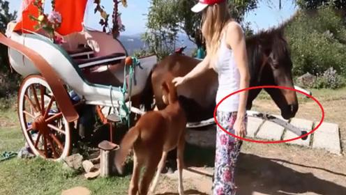 美女正在摸马崽,突然感觉屁股后面不对劲,镜头拍下尴尬画面