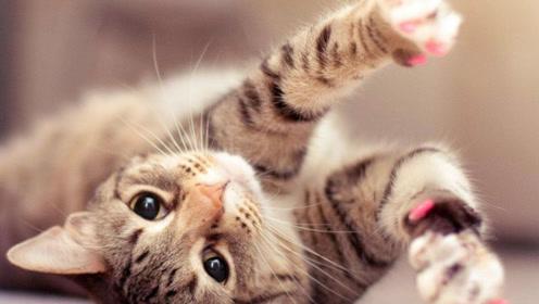 沉迷吸猫的科学证据来了!原来一切都是喵星人的陷阱!