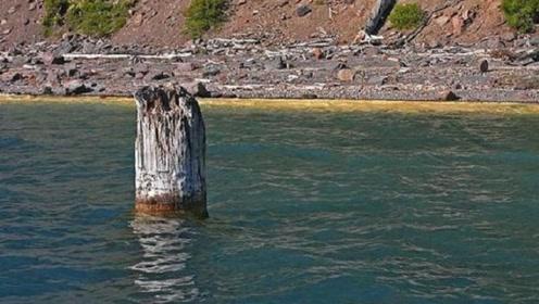 """世上最""""神奇""""的木头:垂直水中漂浮120年,据说还能控制天气"""