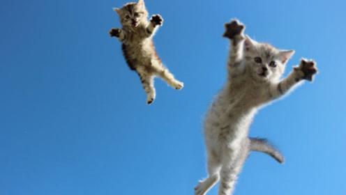 猫咪为什么摔不死?真的是有9九条命吗?10倍镜头下告诉你答案