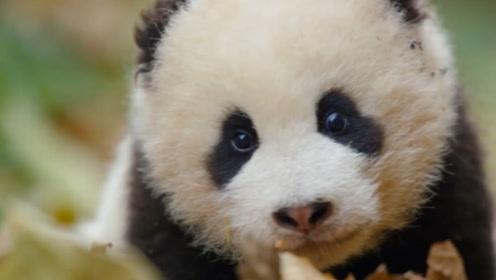 """印度人再次""""开挂"""",没有租到大熊猫,大象却变成了黑白色!"""