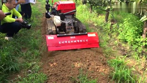 旋耕、开沟、割草、施肥、回填!遥控履带自走式旋耕机,都能干!