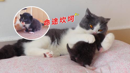 小奶猫刚睁眼,就被抱头啃,都是渣爸爸惹得祸!