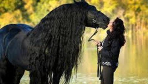 美女捡到一匹小黑马,结果越养越不对劲,专家:你捡到宝了!