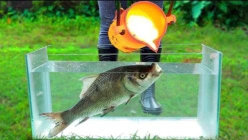 鱼缸里倒入1100度铜水,里面的鱼会被烤熟么?这鱼还能吃吗?