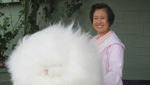 老奶奶捡到一只小兔子,越养越奇怪,原来它身份很了不得