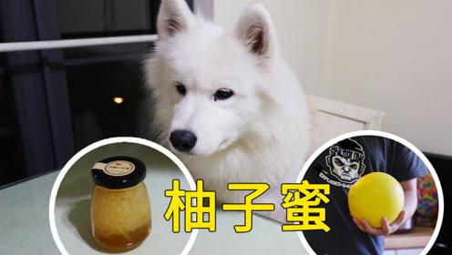铲屎官自制柚子蜜给粉丝当礼物,在旁边围观的狗狗被馋到流口水