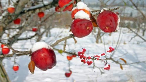 世界上最贵的苹果,切开一看,果然物超所值