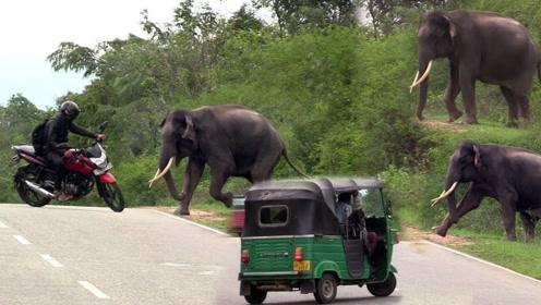 在印度野外开车,真不是闹着玩的,动不动就窜出一个大象!