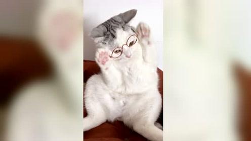 猫咪戴上眼镜后全都蒙了,只有最后那个是爱学习的好孩子