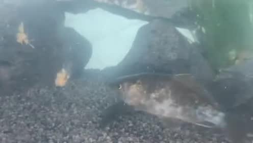 钓鱼:饵料入水后,明明鱼儿在吃饵,为何提竿不中鱼呢?