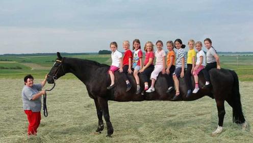 """世界上体型""""最大""""的马,身高达到3米,一匹马就能坐10个人"""