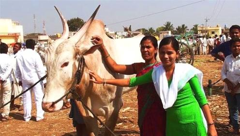 印度女子一生不结婚,与一头牛相依为命18年,原因竟为了比赛