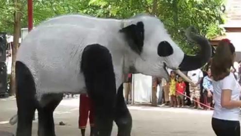 """中国拒绝印度""""租熊猫"""",印度""""开挂"""",直接脑洞大开""""生产""""熊猫"""