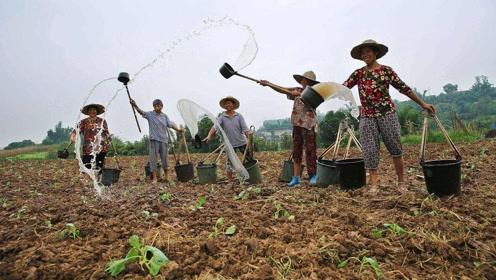 把农村的地集体承包下来,进行现代化种植可行吗?