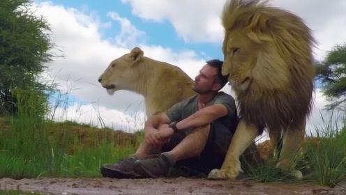 10年前小伙救下一小狮子,回大草原中探望,结果令他意外!