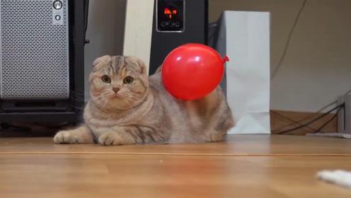 当猫咪遇见气球,会发生什么有趣的事情?结果出乎你的意料