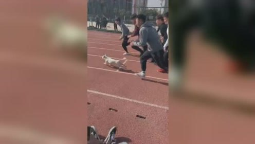 流浪狗乱入400米体测勇夺冠军 赛后享受狗粮按摩全套奖励