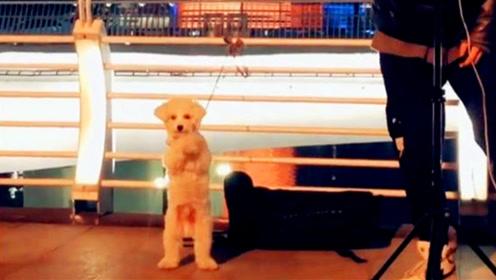 操碎了心!主人街头唱《野狼disco》狗狗一旁伴舞