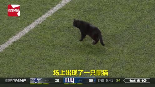 全场焦点!黑猫误闯职业橄榄球球场,打断比赛赢得欢呼