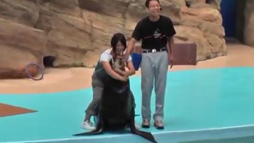 史上最皮海豹!在女子抱住海豹时,它忽然动了坏心思