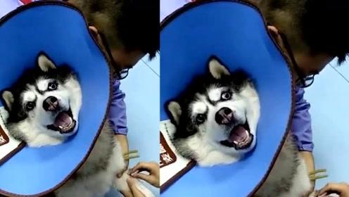 打个针差点把自己送走 夸张的表情把医生逗笑了