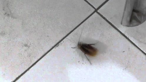 男子作死将硫酸注入在蟑螂体内,下一秒画面太美