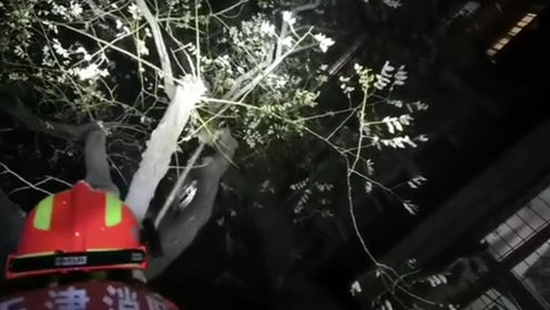 小奶猫被困10米高树上一整天 消防员巧计施救