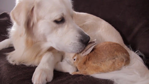 狗子和兔子在沙发上玩,兔妹逗狗哥开心,网友:真是好伙伴呢