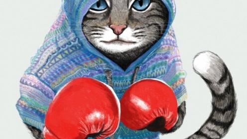 不想当拳王的猫不是好猫!