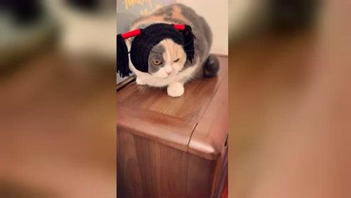 给一只猫戴上了帽子,家里其他猫都认不出它了