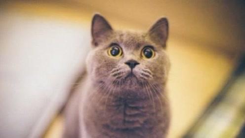 为什么中国人不吃猫肉?李时珍早已告诉我们答案,真相很无语