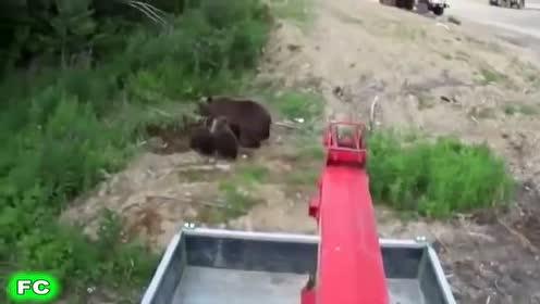 看看国外大叔见了大熊什么态度,服!
