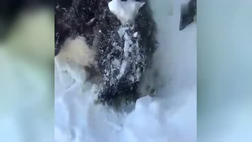 外国小哥发现雪堆冻僵的狗狗,二话不说砸雪把它带回家