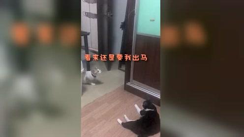 一直围观的萌猫出手了,他是否能够拿到逗猫棒呢?