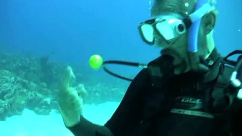 在20米的深海里打开一个生鸡蛋 看到神奇的一幕