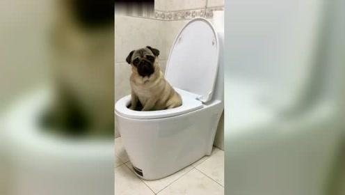 小狗狗卖萌,小模样可爱的不行