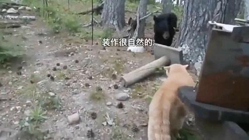 战斗民族的熊又爆出丑闻!被喵星人直接赶到树上
