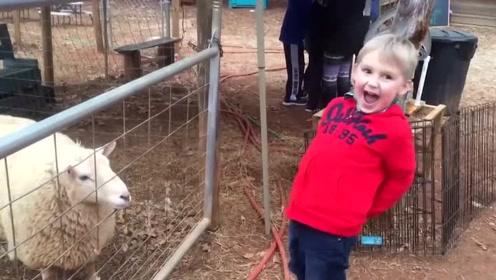 六一萌娃们回农村 跟牛羊鸡玩的好开心