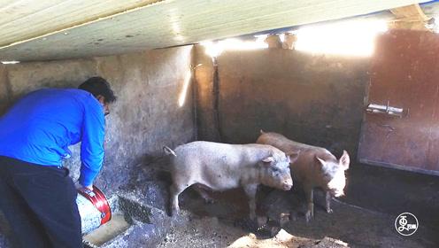 农夫校长种菜养猪办学校,17年培育2000多名学生,3人考上清华北大