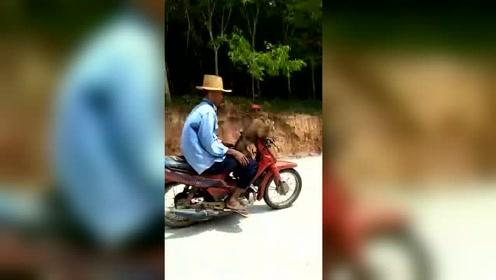 猴子骑着摩托上路,真是太会玩了!