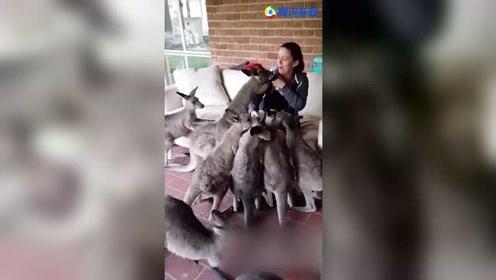 好萌!小袋鼠为了寻觅食物 把主人团团围住