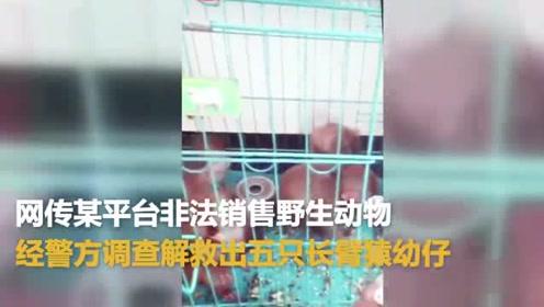 网传某平台非法销售野生动物 经警方调查解救出5只国家保护动物