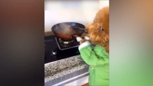 泰迪成精了!自己在厨房开始炒菜了,而且还是荤的!
