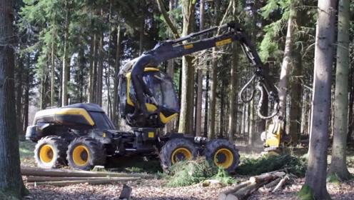 伐木都这么快?国外八轮式林木采伐机,网友:这伐木效率太高!