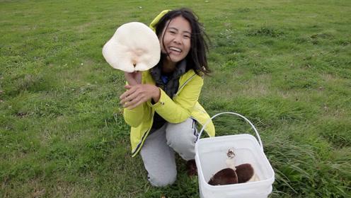 新西兰野外喂蜜蜂采蘑菇,还有英国美女下厨做早餐