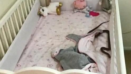母亲打开女儿房门却看到吓人一幕 一条毒蛇正在女儿婴儿床上