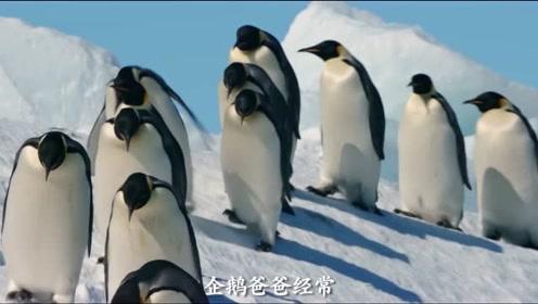 《帝企鹅日记2》终极预告 张歆艺惊喜配音萌翻全场