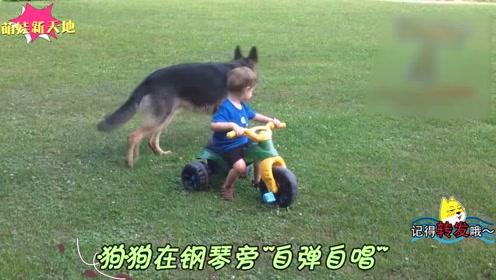"""狗狗在钢琴旁""""自弹自唱"""" 宝宝不堪忍受出手阻挠,萌爆了"""