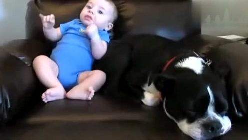 萌宝放了一个屁,一旁的狗狗做了一个动作,萌宝这下哭笑不得了